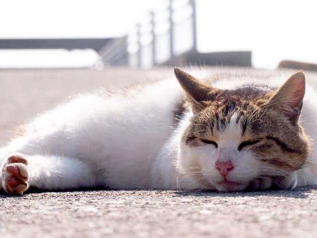 小春日和の猫