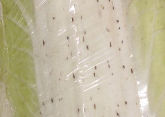 白菜の黒い点